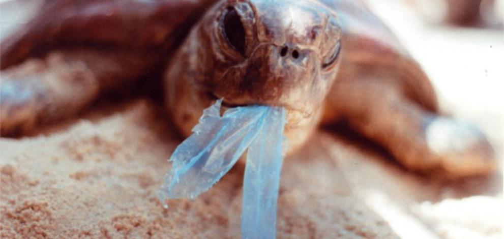 deseuri-de-plastic
