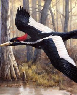 Şase specii de animale pe cale de dispariție