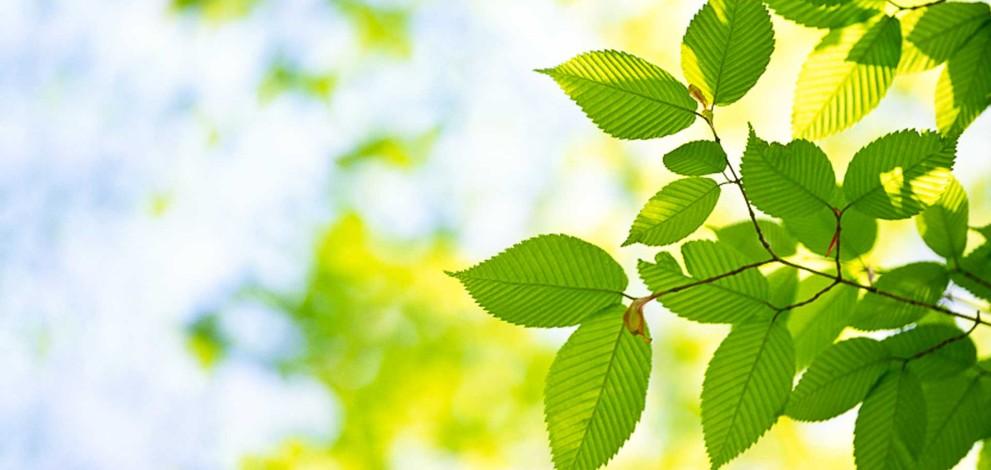 Copacii sunt ființe sociale