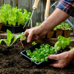 Cum să cultivi o provizie constantă de produse organice în cel mai mic spaţiu posibil