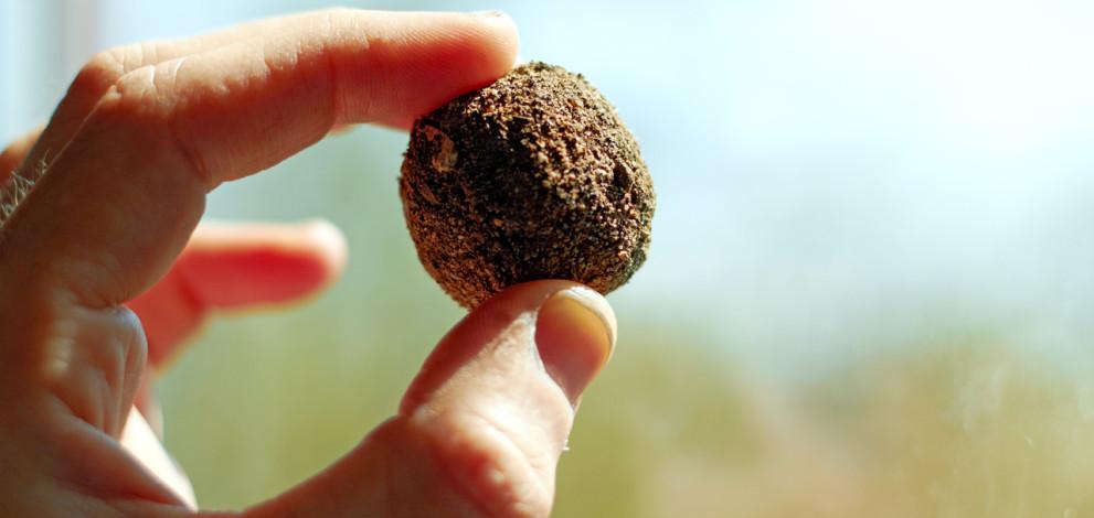 Bombardierele de semințe aeriene pot planta un milion de copaci pe zi şi pot reconstrui pădurile