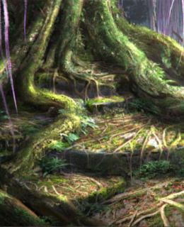 Planeta comunica folosind o reţea de internet formată din fungi