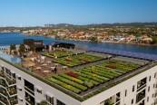 gradini urbane comunitare