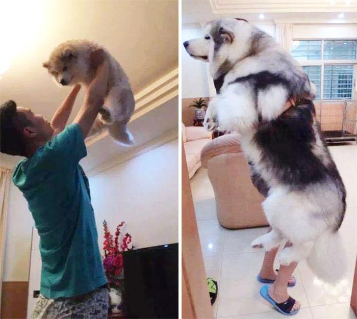 cum cresc cainii