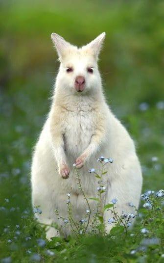 fotografii hazlii cu animale