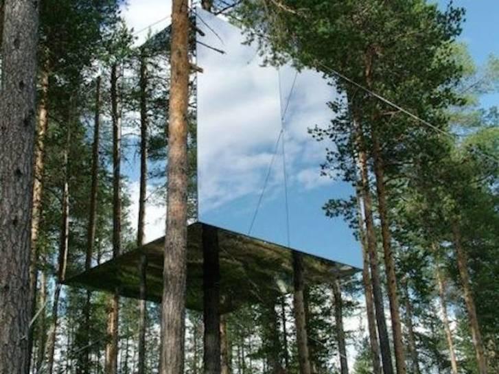 case verzi in copaci