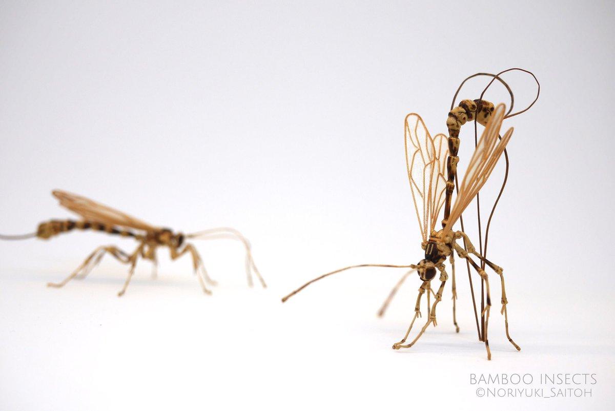 ecoarta insecte din bambus