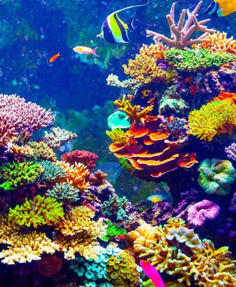 Recifuri de corali